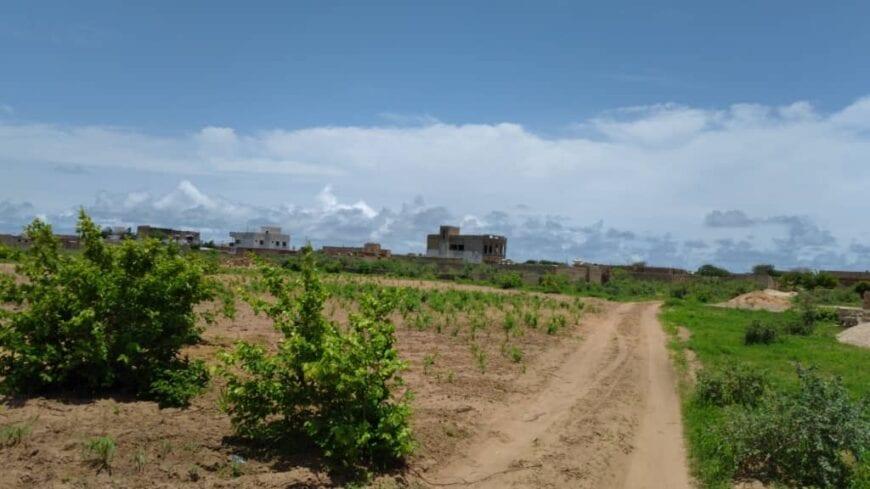Terrain-300-metre-carre-saly-joseph-4
